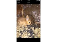 Rabbits 🐰