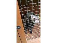 Ferret with hutch, handling gloves and carrier