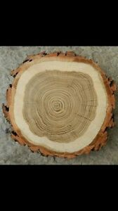 Wood coasters / wood centrepieces / wood slices / wood rounds