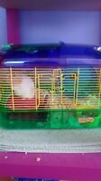 Moving 2 hampsters and their cages free