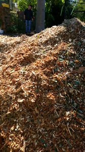 Free mulch to take as much as you want Belrose Warringah Area Preview