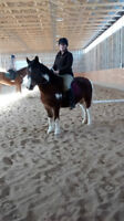 IN BARN PART LEASE ON TWO AMAZING PONIES