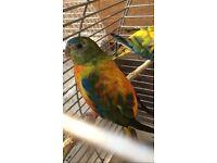 Beautiful colour birds for sale