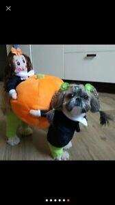 Dog Halloween pumpkin outfit. New