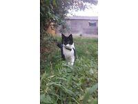 Loving black and white cat