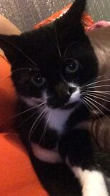 3 yr old tom cat urgent home needed