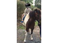 Sound little mare