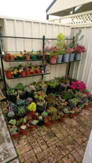 Garden Redesigned - All Succulents Must Go!!