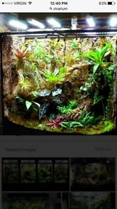 LOOKING FOR LIVE VIVARIUM(S)