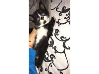 Kitten looking for new home x