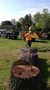 Firewood and Tree Removal Services London Ontario image 8