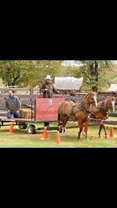 Private Horse Driving Lessons
