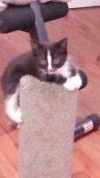chaton à donner
