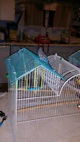 Set of two Budgies (1 Blue & 1 Green)