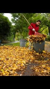 Leaf Clean up and garbage removal  St. John's Newfoundland image 1