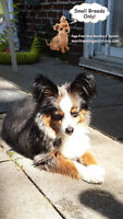 SINCE 2010 home boarding/daycare/pension for small dogs only