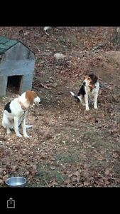 Lost hounds