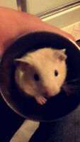 Looking for a home for my hamster