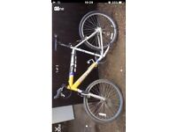 Bike- adult male - fantastic condition