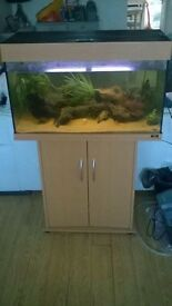 Juwel Rio 125L Tropical Fish Tank Setup