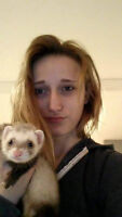 Female Ferret For Sale With Cage & Accessories