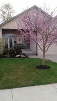 Strathroy Immaculate 7 year old Bungalow