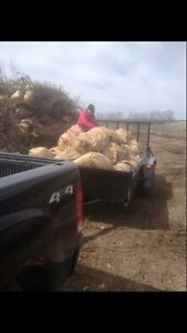 Flat Rate Leaf Blowing And Clean Up  Kawartha Lakes Peterborough Area image 1