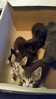 Free Kittens! 7 kittens available now!