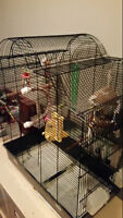 Big cage for cockatiels, conure or similar sized birds
