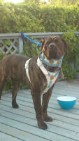 AWESOME DOG COLLARS & HARNESSES--2 SETS LEFT!!