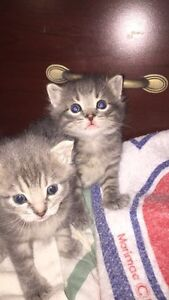 3 kittens (looking for a good home)
