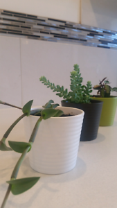 Indoor Succulent Hobart CBD Hobart City Preview