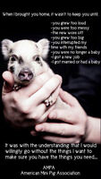 Pot Belly Pigs SIZE, WEIGHT AND LIFE SPAN INFO!!!!!!