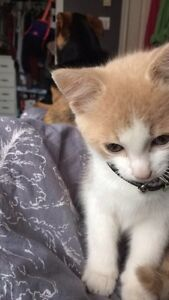 Kitten to good home only
