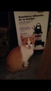 Cute kitties need loving homes