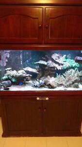 4x2x2 Marine Aquarium Tank Byford Serpentine Area Preview