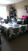 Upscale Condo Female Roommate Wanted - Rental Central Location