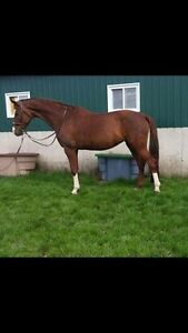Horse For Show Lease