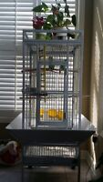 A pair of lovebirds with cage
