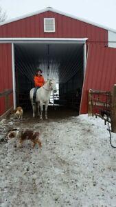 3 BROKE HORSES. Negotiable!