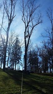Affordable Tree Removal  Cambridge Kitchener Area image 1