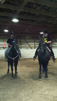 Riding Lessons  Offered!