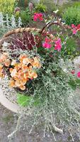 ** Fleursplantes annuelles en paniers ou pots suspendus **