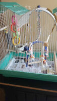Cockatiel for sale! Everything included!