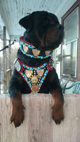 IMPRESSIVE LEATHER COLLARS & HARNESSES