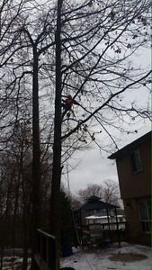 Affordable Tree Removal  Cambridge Kitchener Area image 3