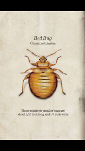 Bed bugs keeping you up at night?  Call the pros today.