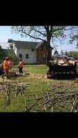 Firewood and Tree Removal Services