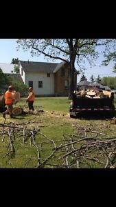 Firewood and Tree Removal Services London Ontario image 1