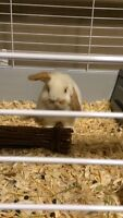 Rabbit to a loving forever home